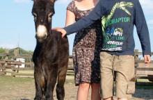 Állatsimogató a Pusztai Állatparkban