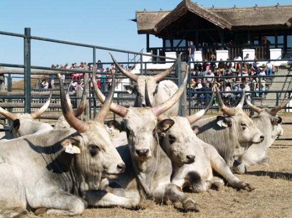 bikavasar